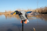 New!!! Чучело мотоутки MOJO® Elite Series™ - Mini Mallard Drake