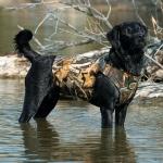 Жилет неопреновый Cabela's 5mm Deluxe Neoprene Dog Vest