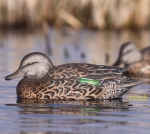 Чучела чирков GHG Pro-Grade Green Winged Teal Early Season Hen Pack