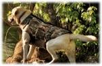 Жилет неопреновый Cabela's 5mm Neoprene Dog Vest with Armor-Flex™ Chest Protector